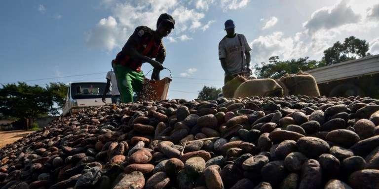 Dans l'ouest de la Côte d'Ivoire, une terre trop convoitée